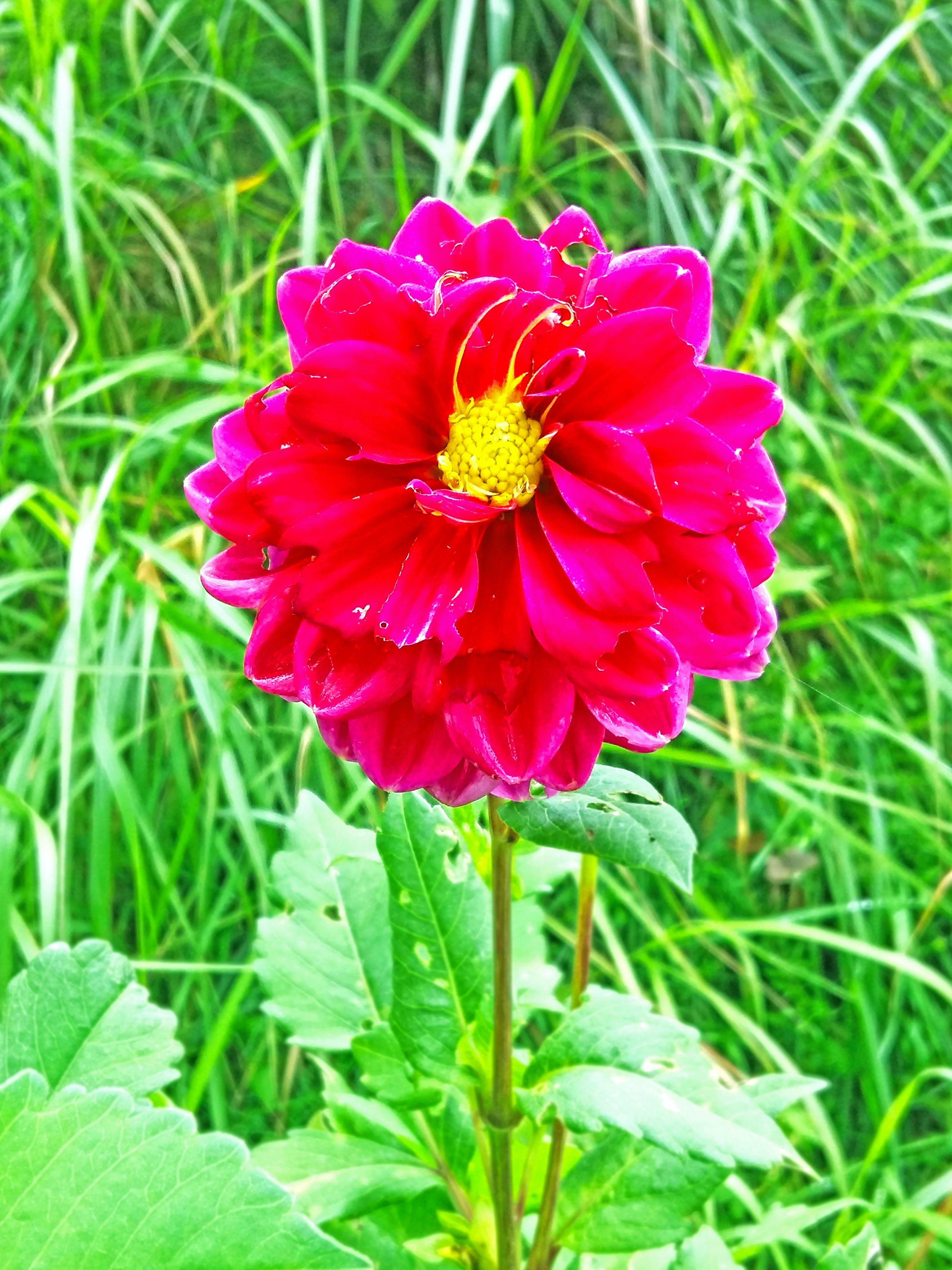 Free stock photo of beautiful, beautiful bloom, beautiful flowers, bell flower