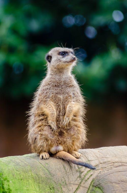 動物, 動物攝影, 可愛, 哺乳動物 的 免费素材照片