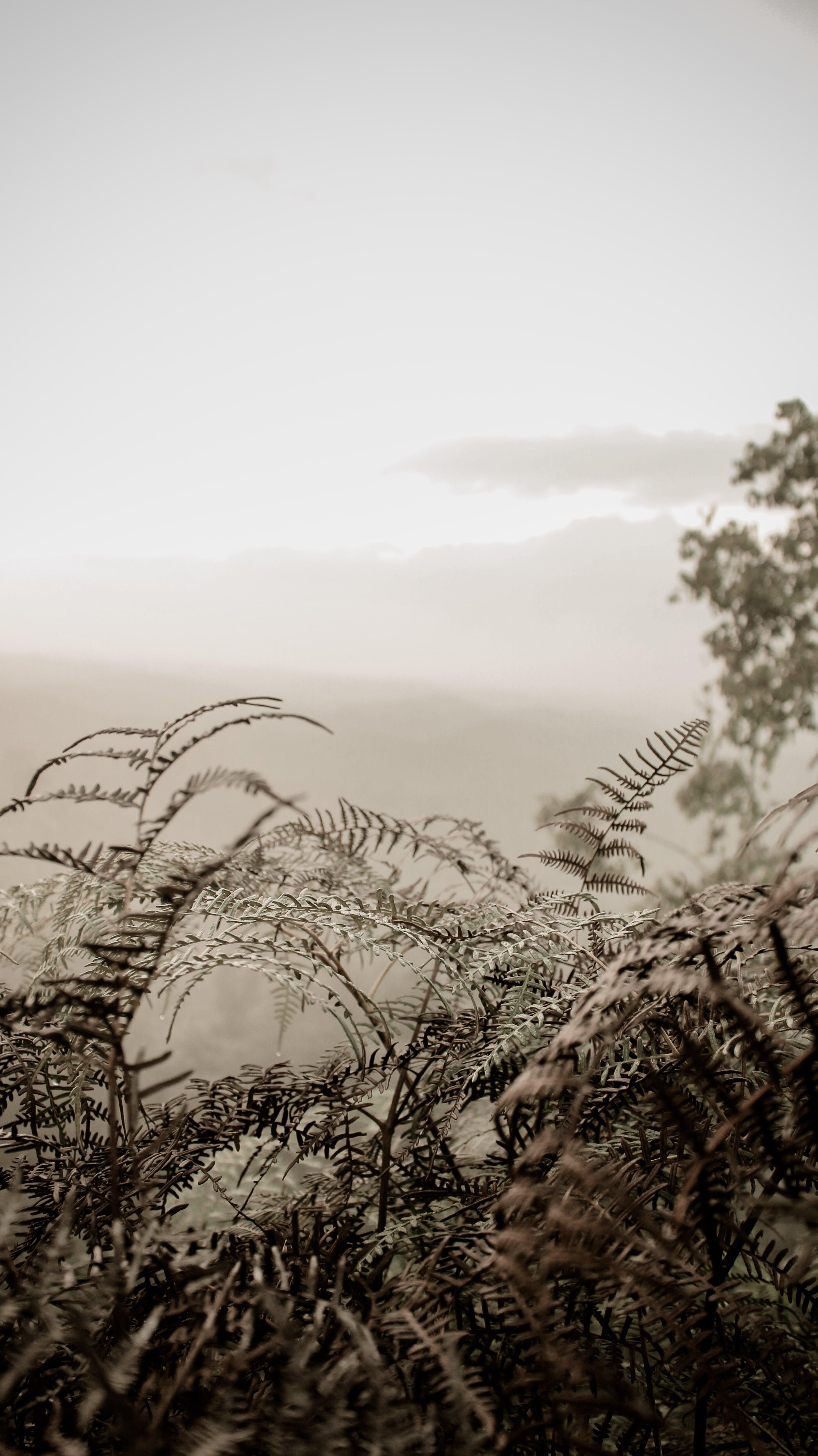 Photo Of Plants