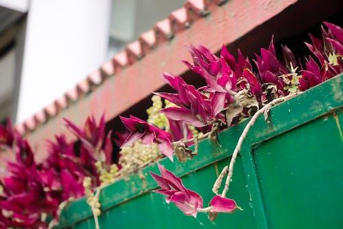 Gratis lagerfoto af smukke blomster, tagterrasse