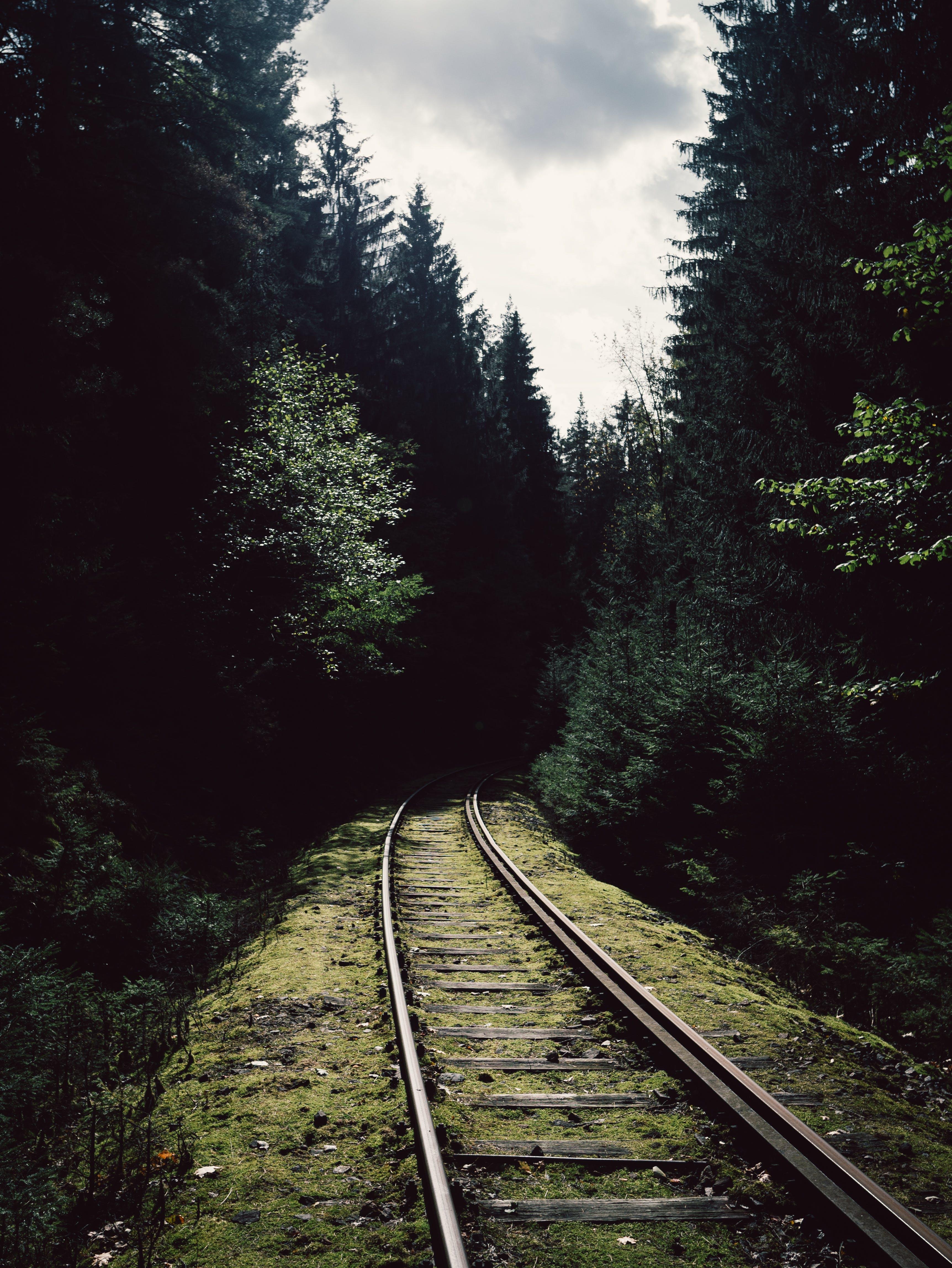 Kostenloses Stock Foto zu bäume, eisenbahn, eisenbahnschienen, fährte
