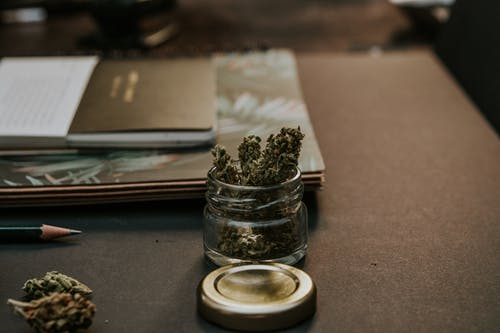 cannabis living soil