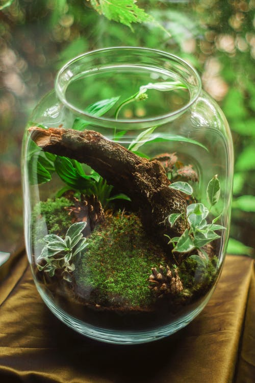 Terrarium in Clear Glass Jar