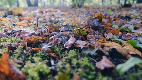 คลังภาพถ่ายฟรี ของ ธรรมชาติ, หญ้า, แบบแผน, แมโคร