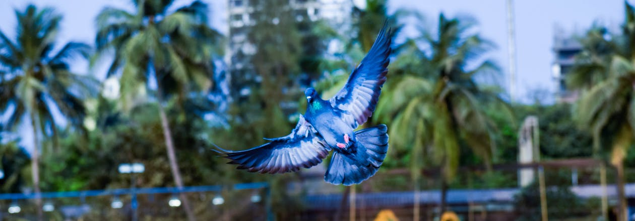 állat, kék, repülő