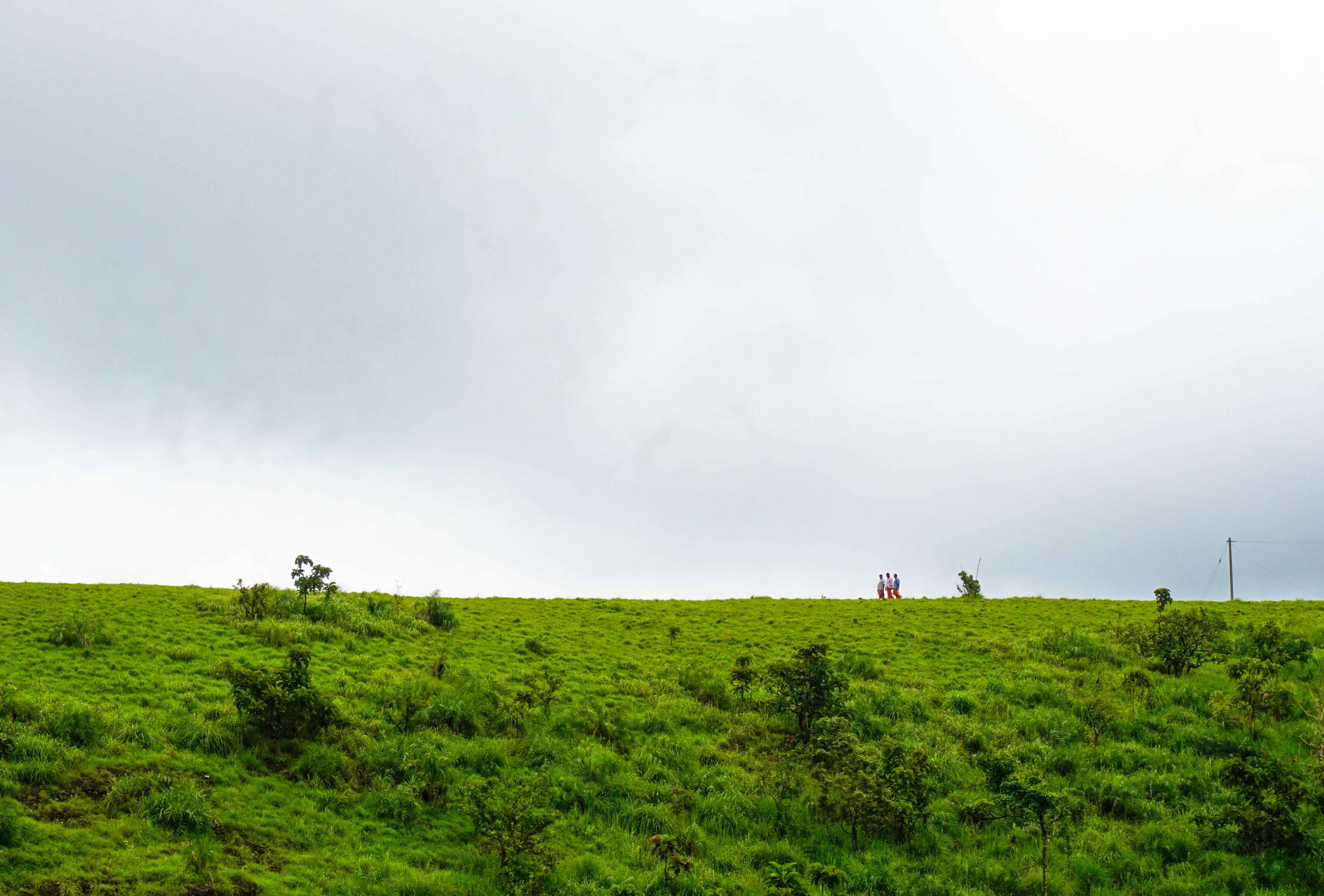 Free stock photo of freindship, india, kerala, landscape