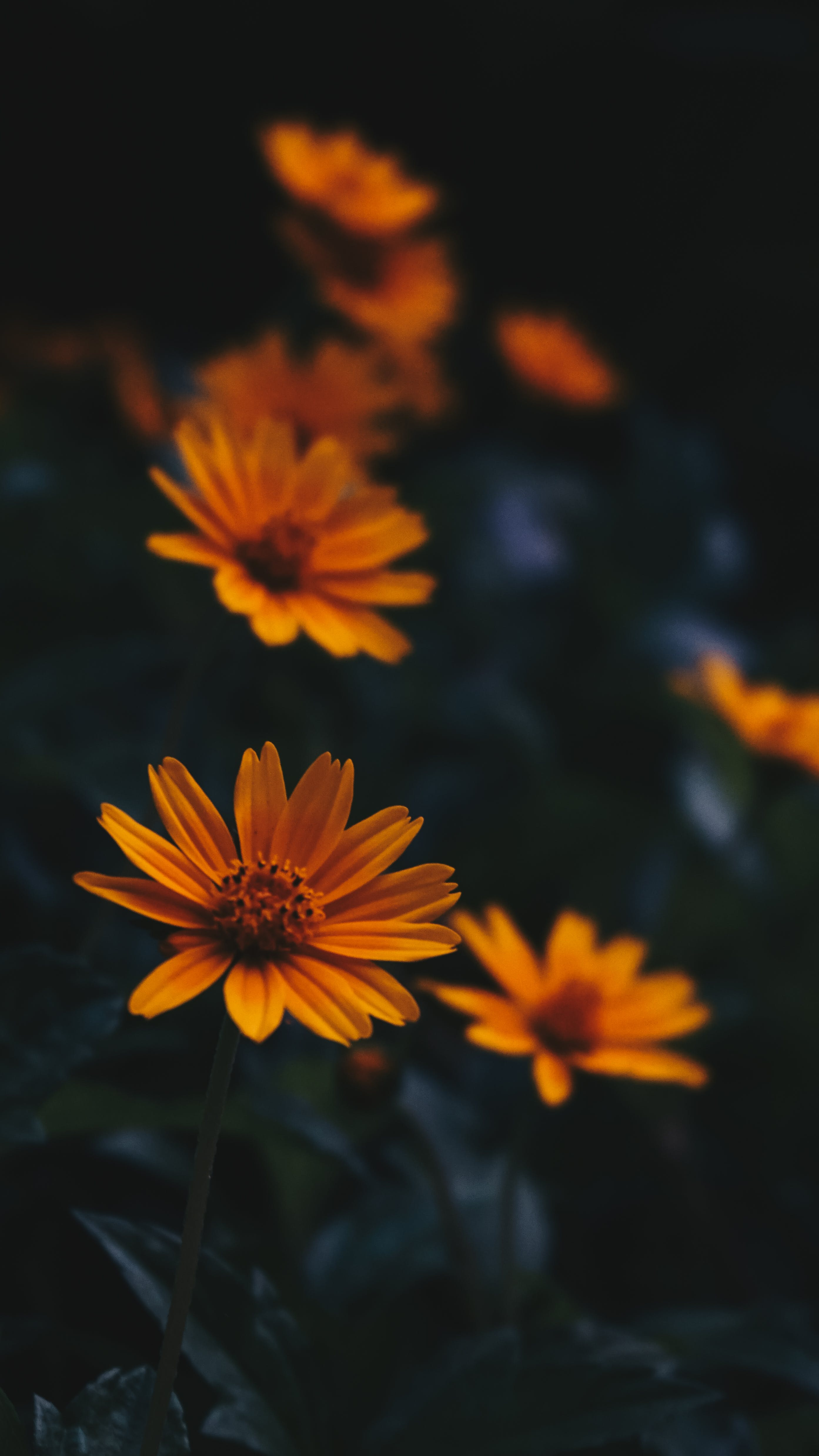 Selective Focus Photography of Flowers
