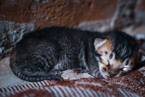 Immagine gratuita di adorabile, animale, animale domestico, carino
