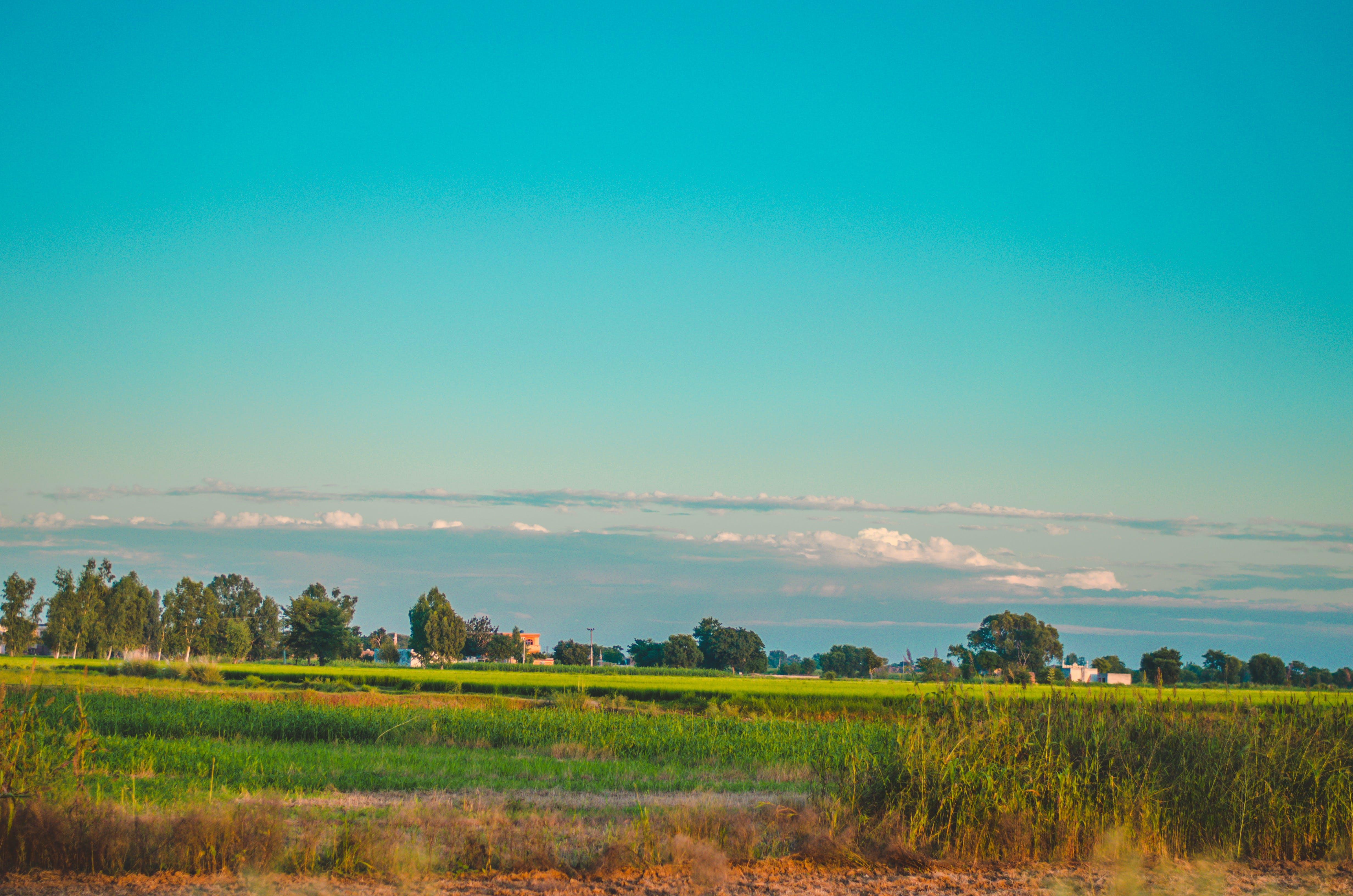 Kostenloses Stock Foto zu #outdoorchallenge, blaue himmel, blauem hintergrund, der grünen wiese