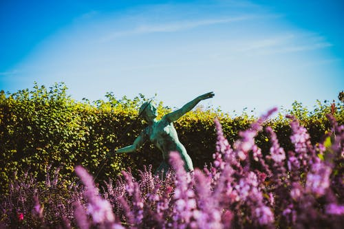 Javelin Statue in a Flower Fields