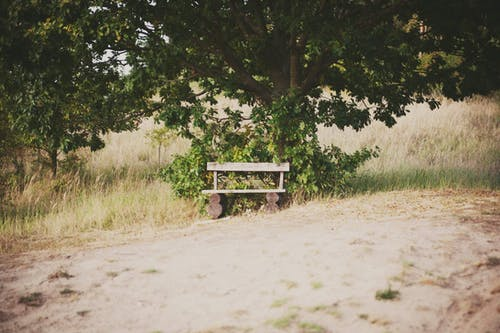 Photos gratuites de aliments, arbre, arbres, banc