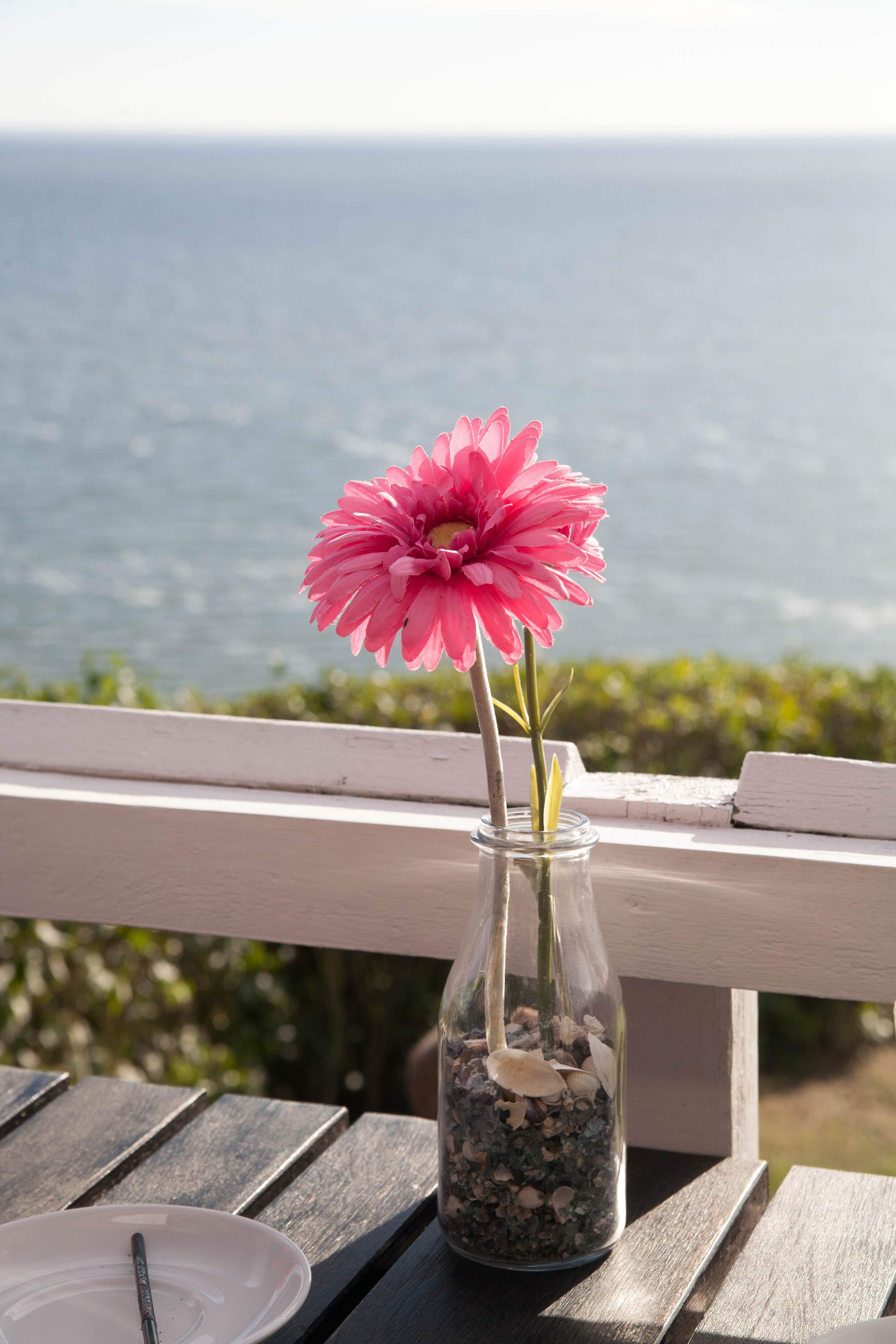 Бесплатное стоковое фото с берег моря, вода, розовый цветок, цветок