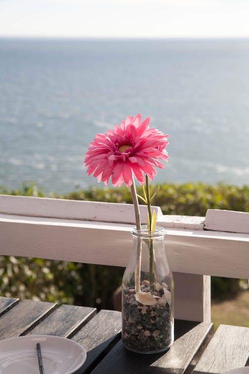 在海边的花, 水, 海邊