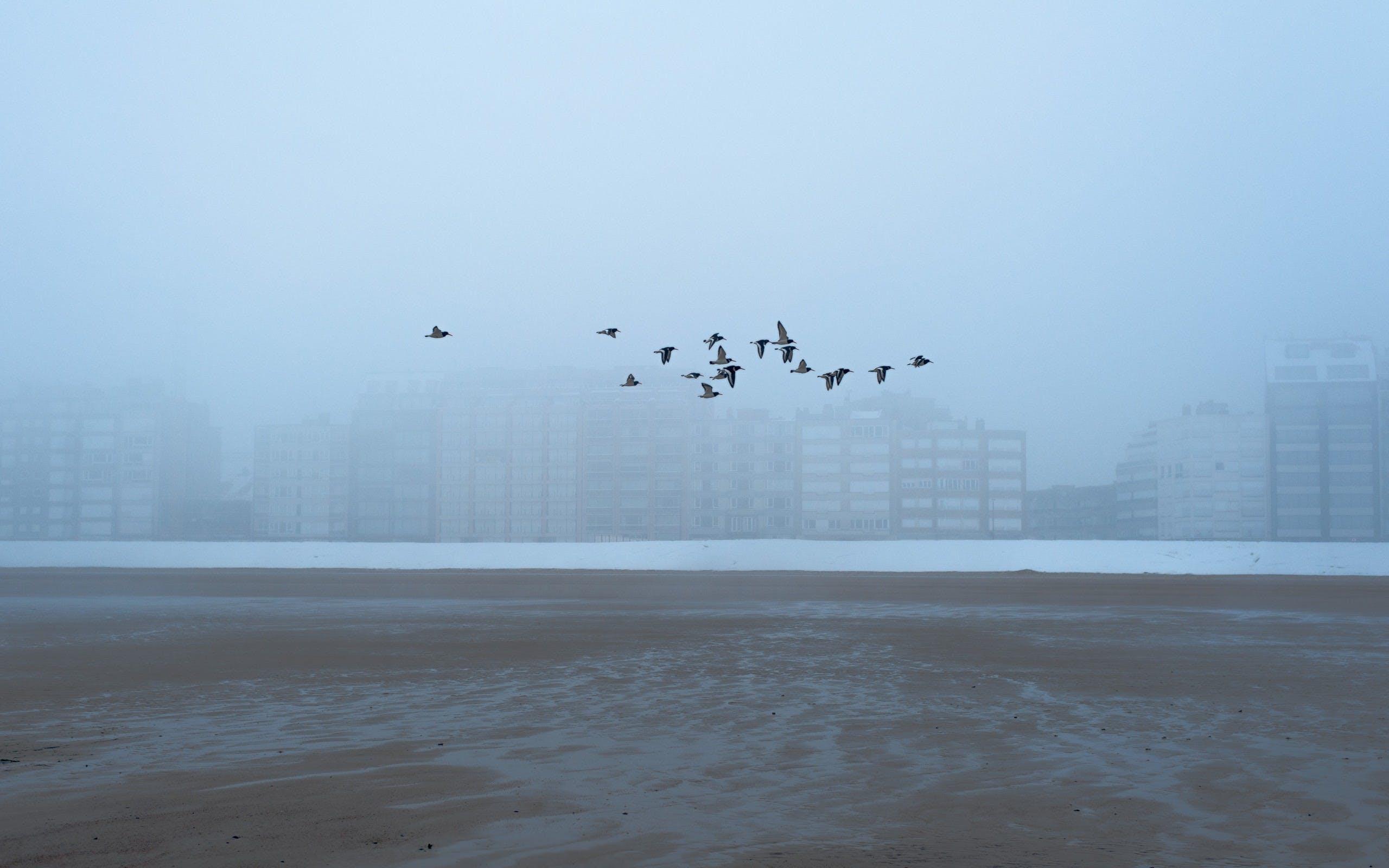 beach, bird, birds