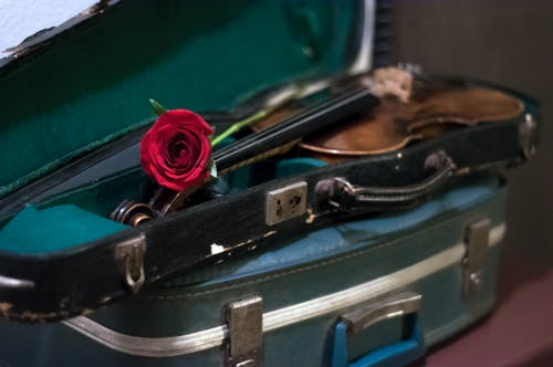 Free stock photo of rose, suitcase, vintage, violin