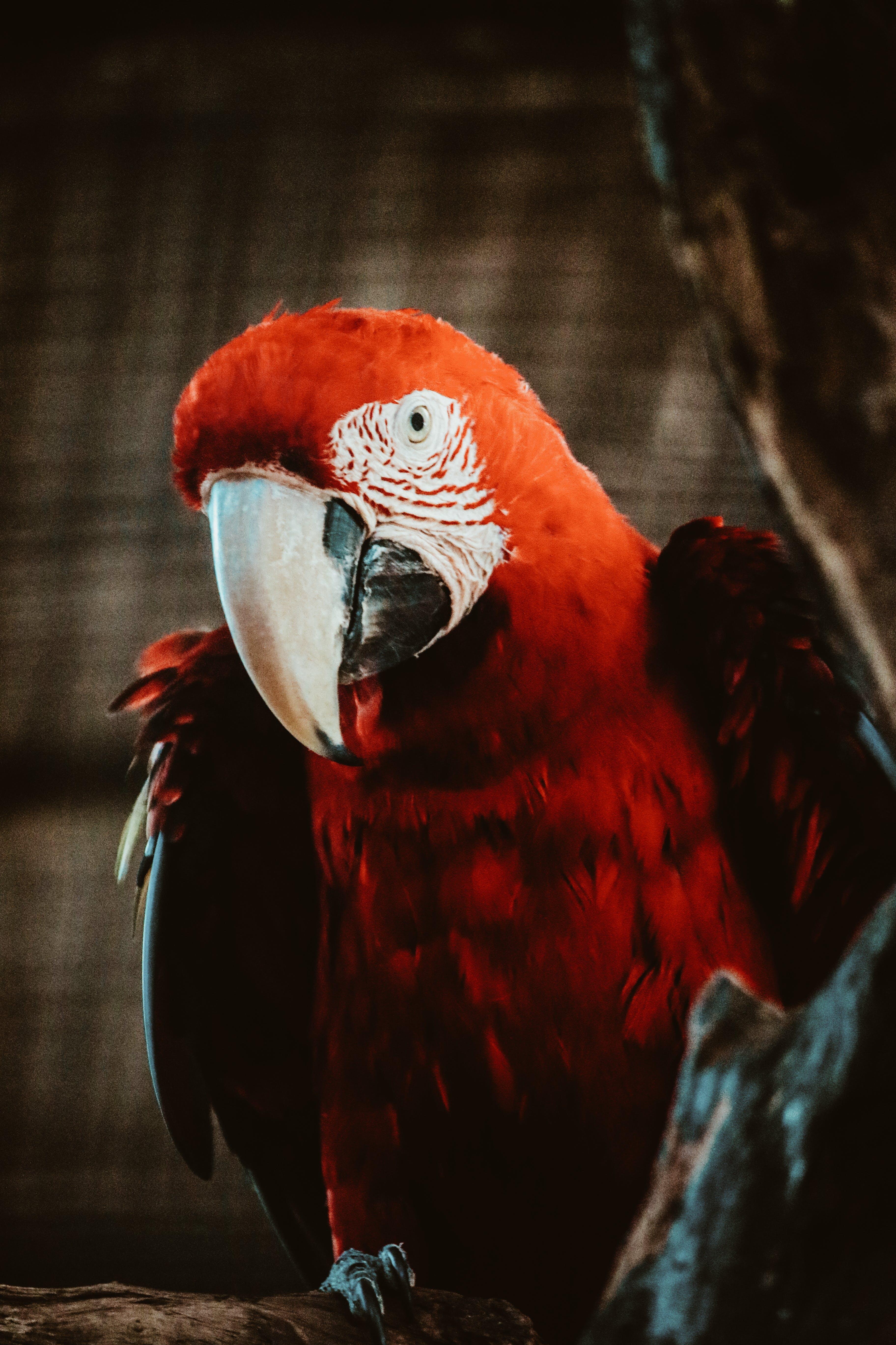 Kostenloses Stock Foto zu natur, vogel, dunkel, tier