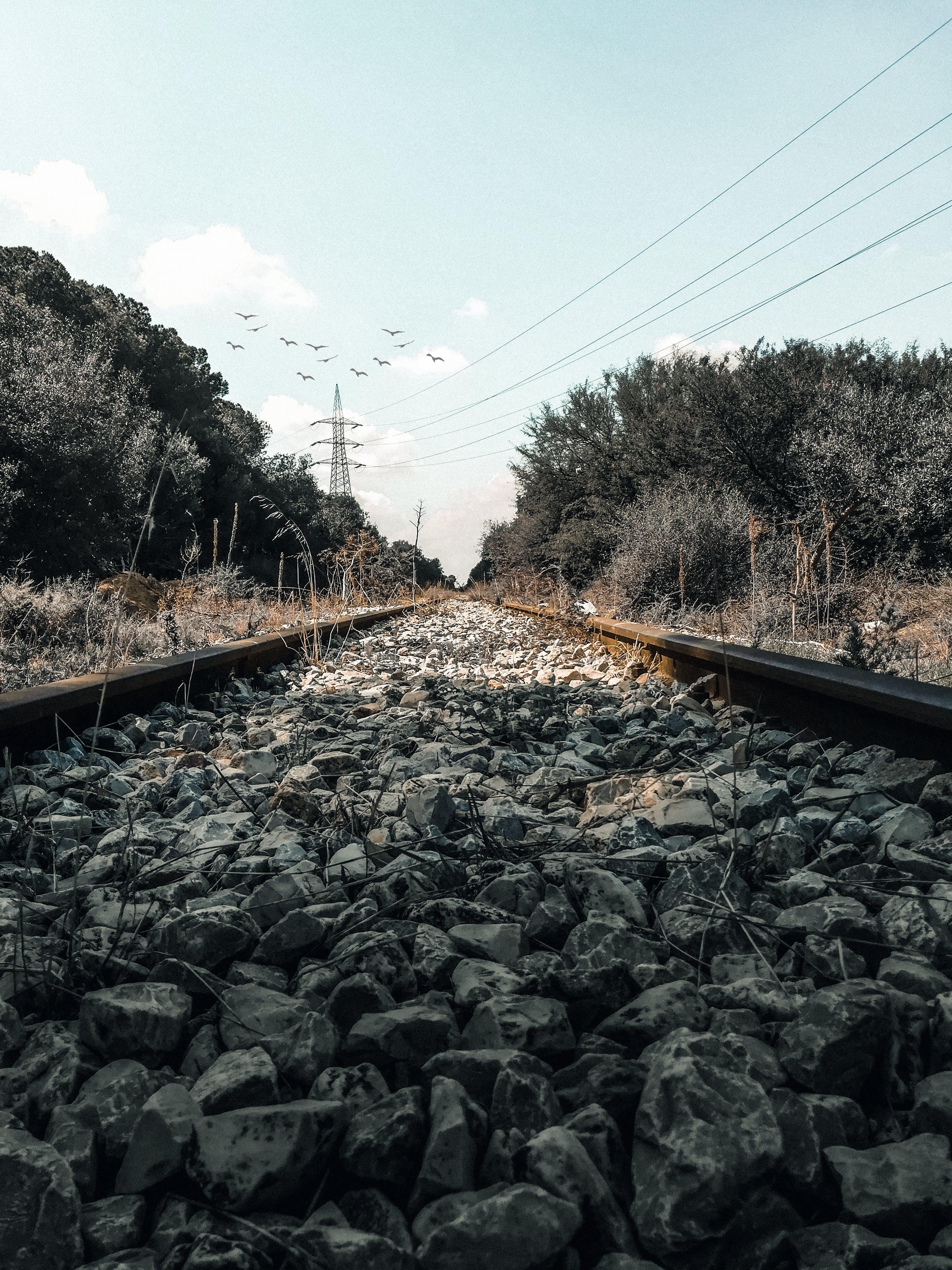 Kostenloses Stock Foto zu eisenbahn, eisenbahnlinie, holz, wald
