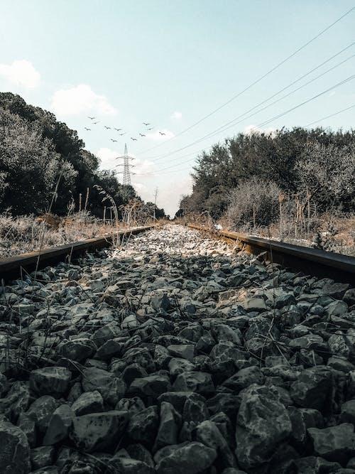 Foto profissional grátis de estrada de ferro, floresta, linha de trem, madeira