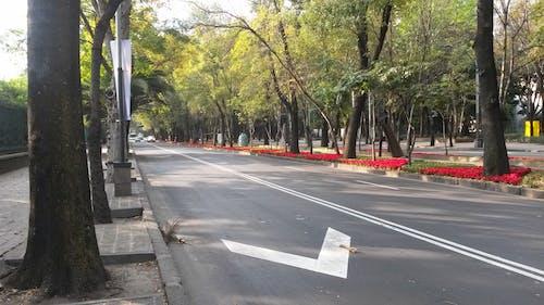 Free stock photo of city, street
