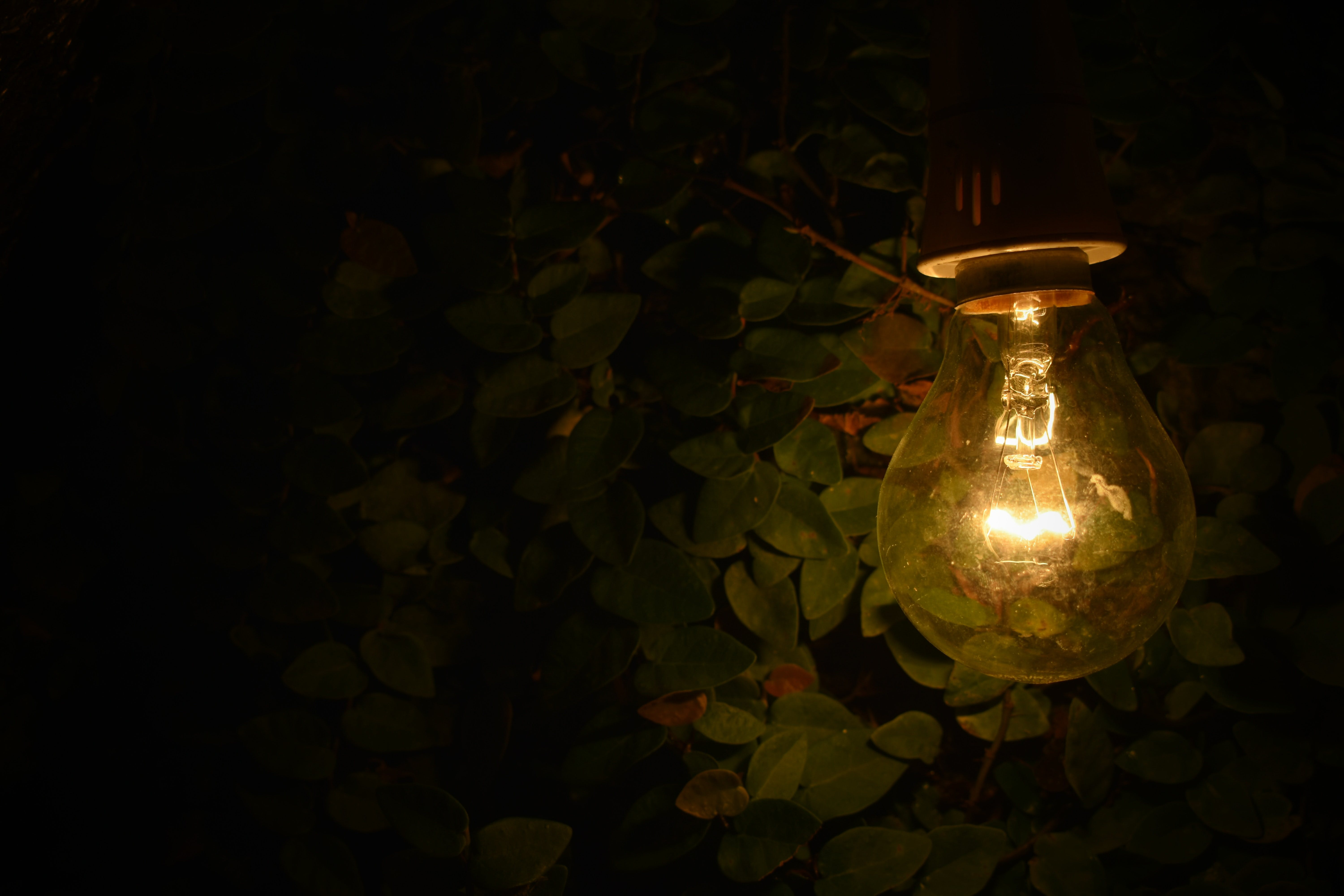 Turned-on Lamp Near Green Plants