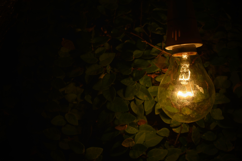 Turned-on Lamp Near Green Plants