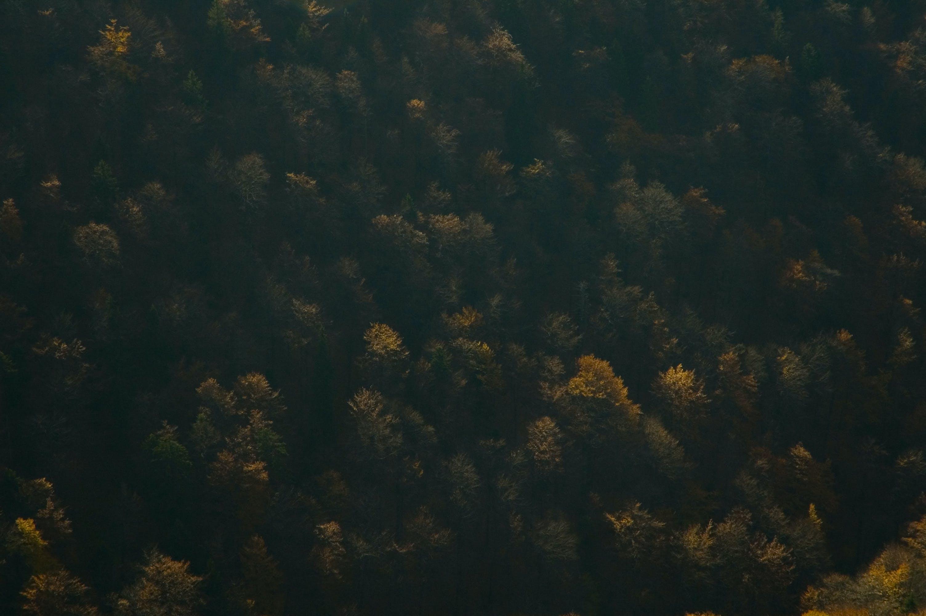aerofotografia, árvores, escuro