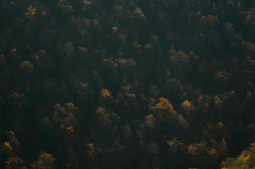 Foto profissional grátis de aerofotografia, ao ar livre, árvores, escuro