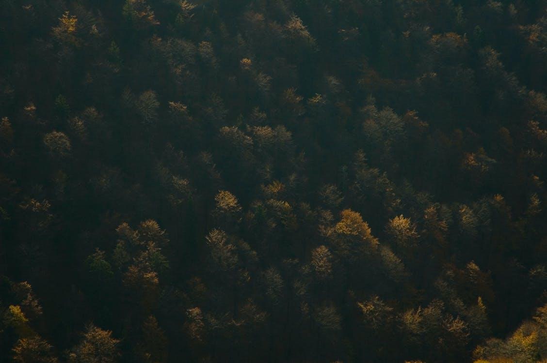 a l'aire lliure, arbres, bosc