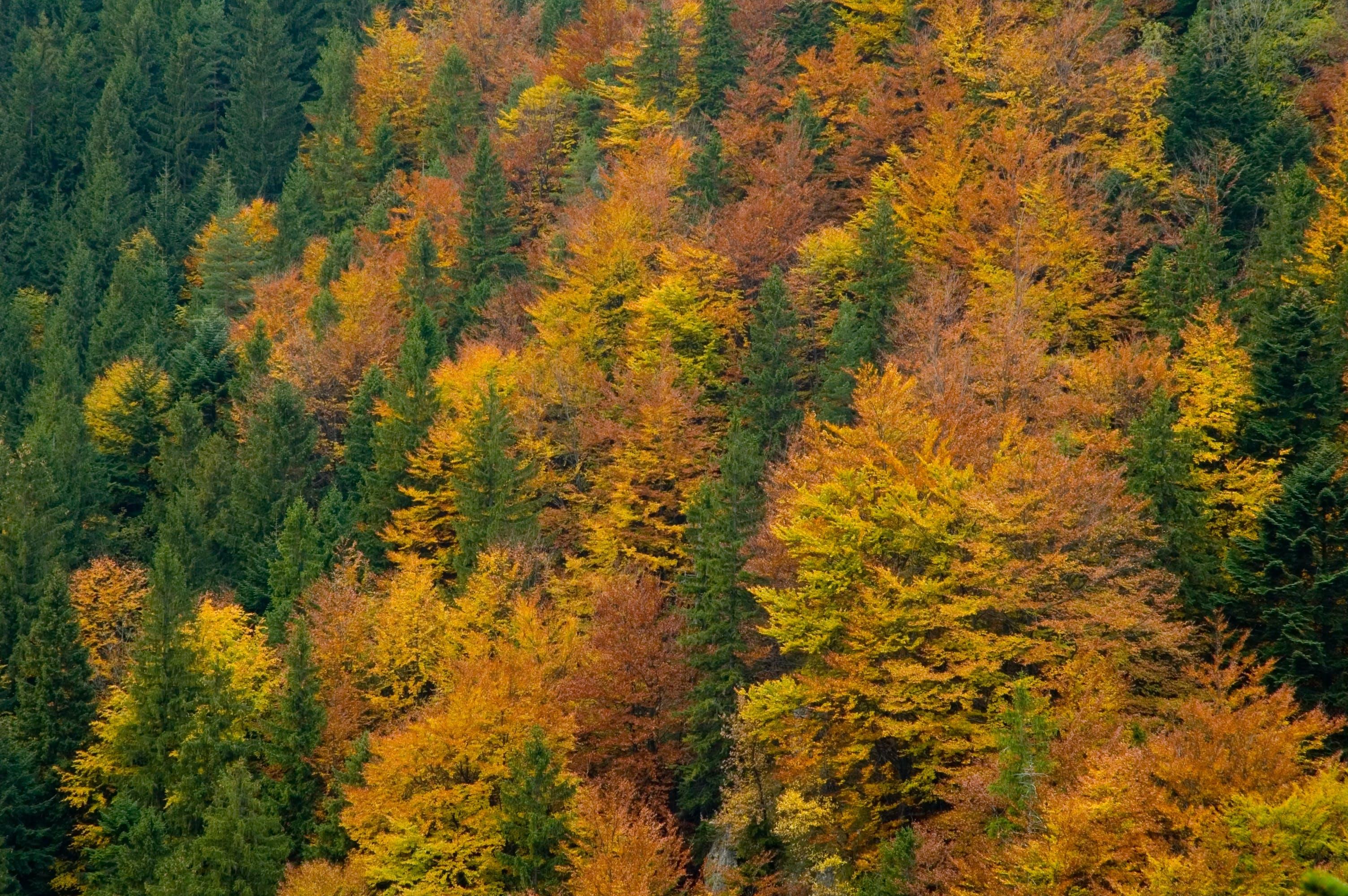 Δωρεάν στοκ φωτογραφιών με γραφικός, δέντρα, εποχή, κωνοφόρο