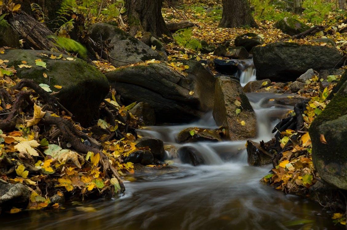 Коричневые и зеленые листья у реки