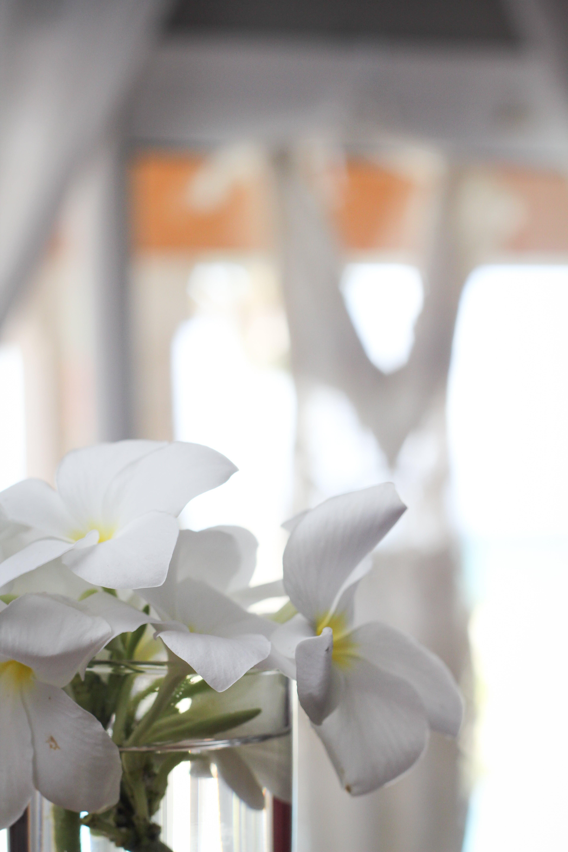 Kostenloses Stock Foto zu blumen, blumen details, gelb und weiß, hochzeit