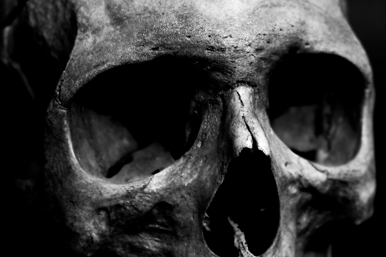 Free stock photo of details, skull, black and white, skulls