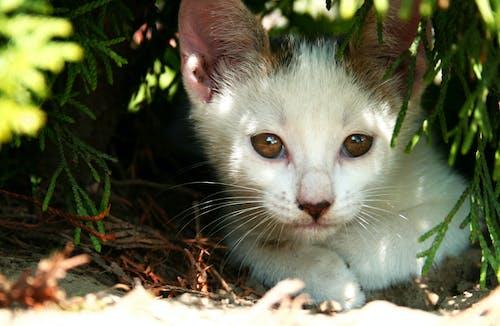 Photos gratuites de chat, chaton, chiot, mignon
