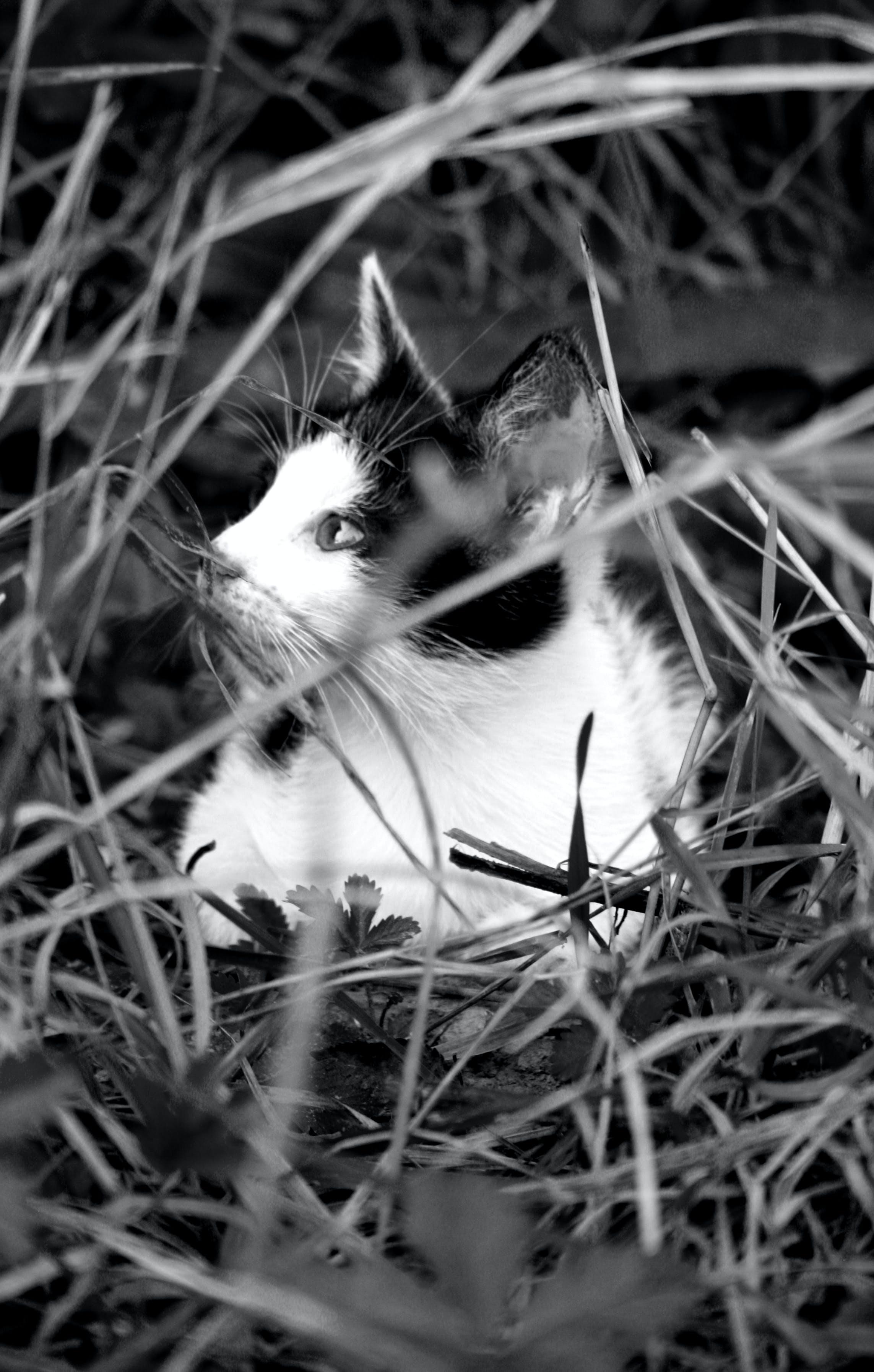 Základová fotografie zdarma na téma černobílá, kočka, koťátko, kotě