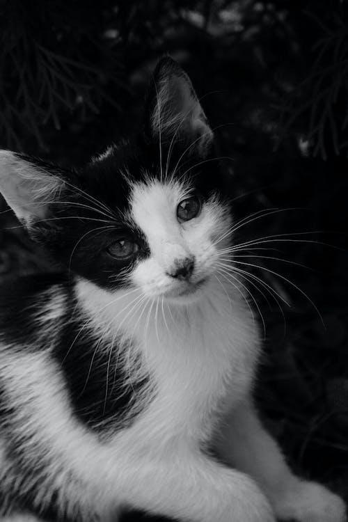 adorável, animal, animal de estimação