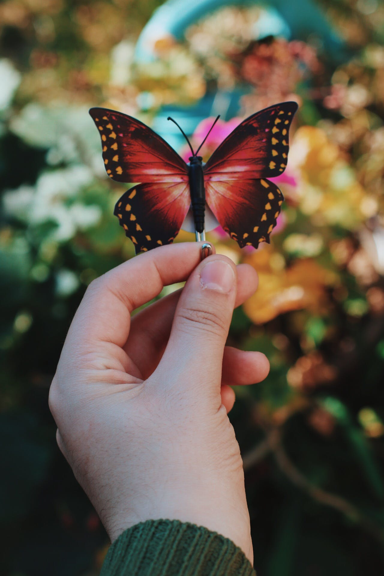 Person Holding Red and Black Butterfly Decor