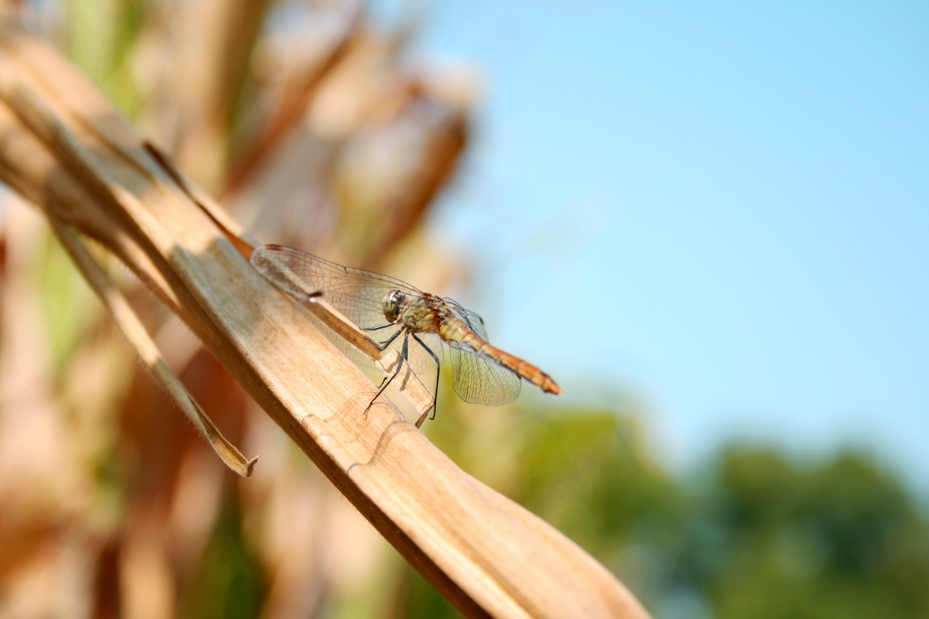 Základová fotografie zdarma na téma detail, hmyz, příroda, vážka