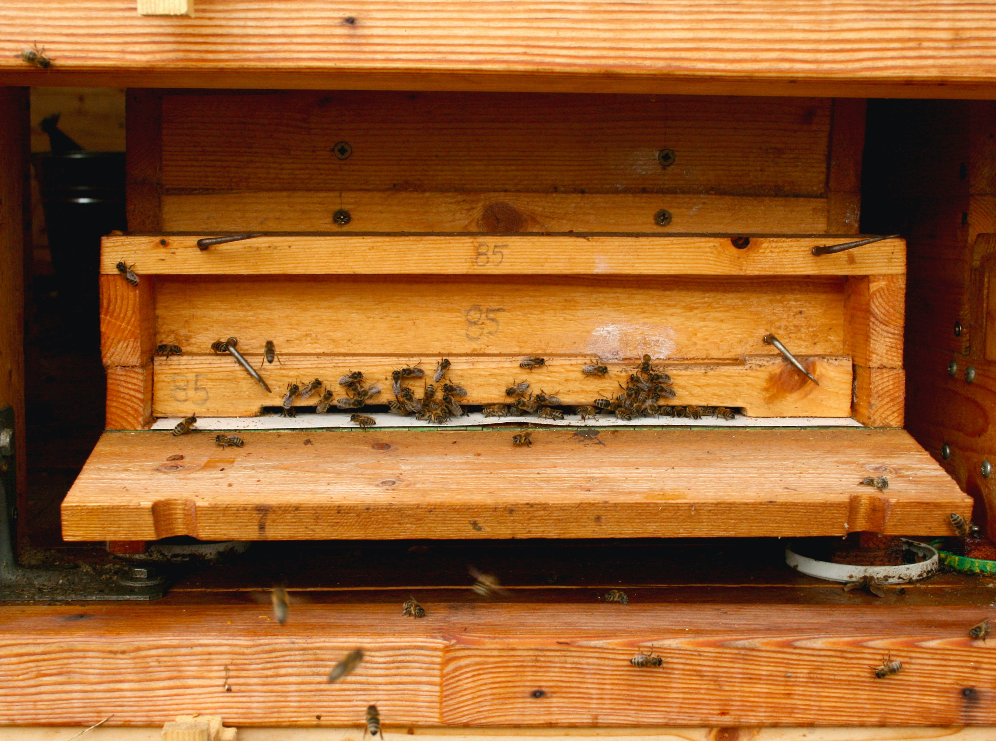Free stock photo of bee, beehive, bees, hive
