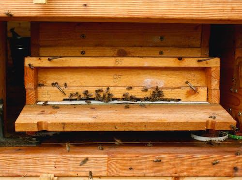 Photos gratuites de abeille, abeilles, ruche