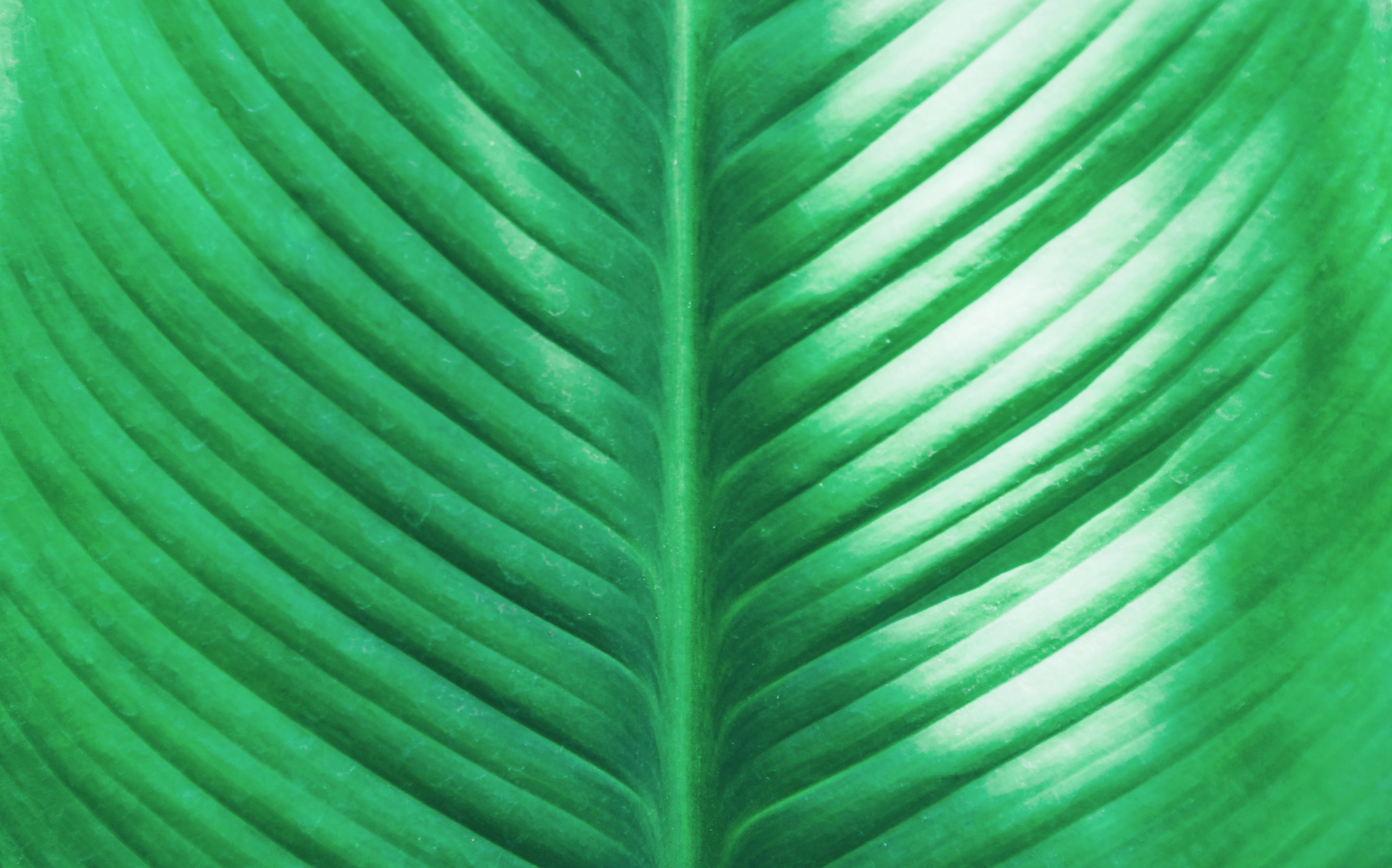 Close-Up Photo Of Green Leaf