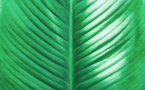 Foto profissional grátis de close, ecológico, estrutura