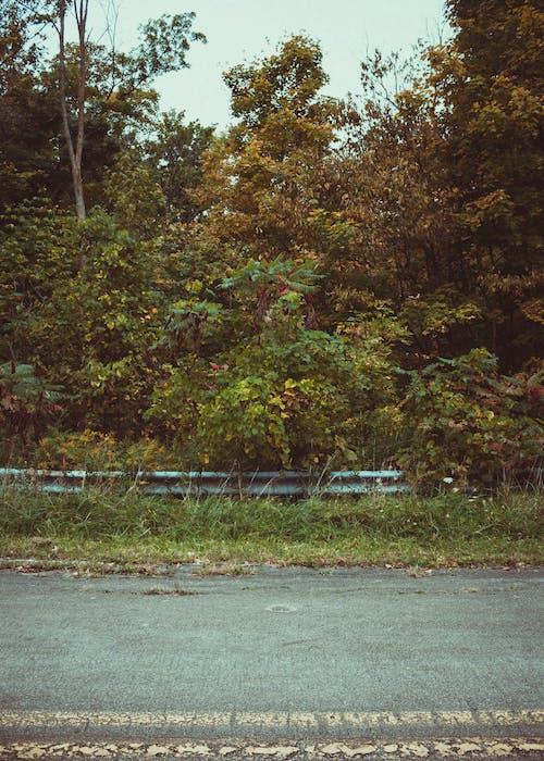 Foto profissional grátis de estrada