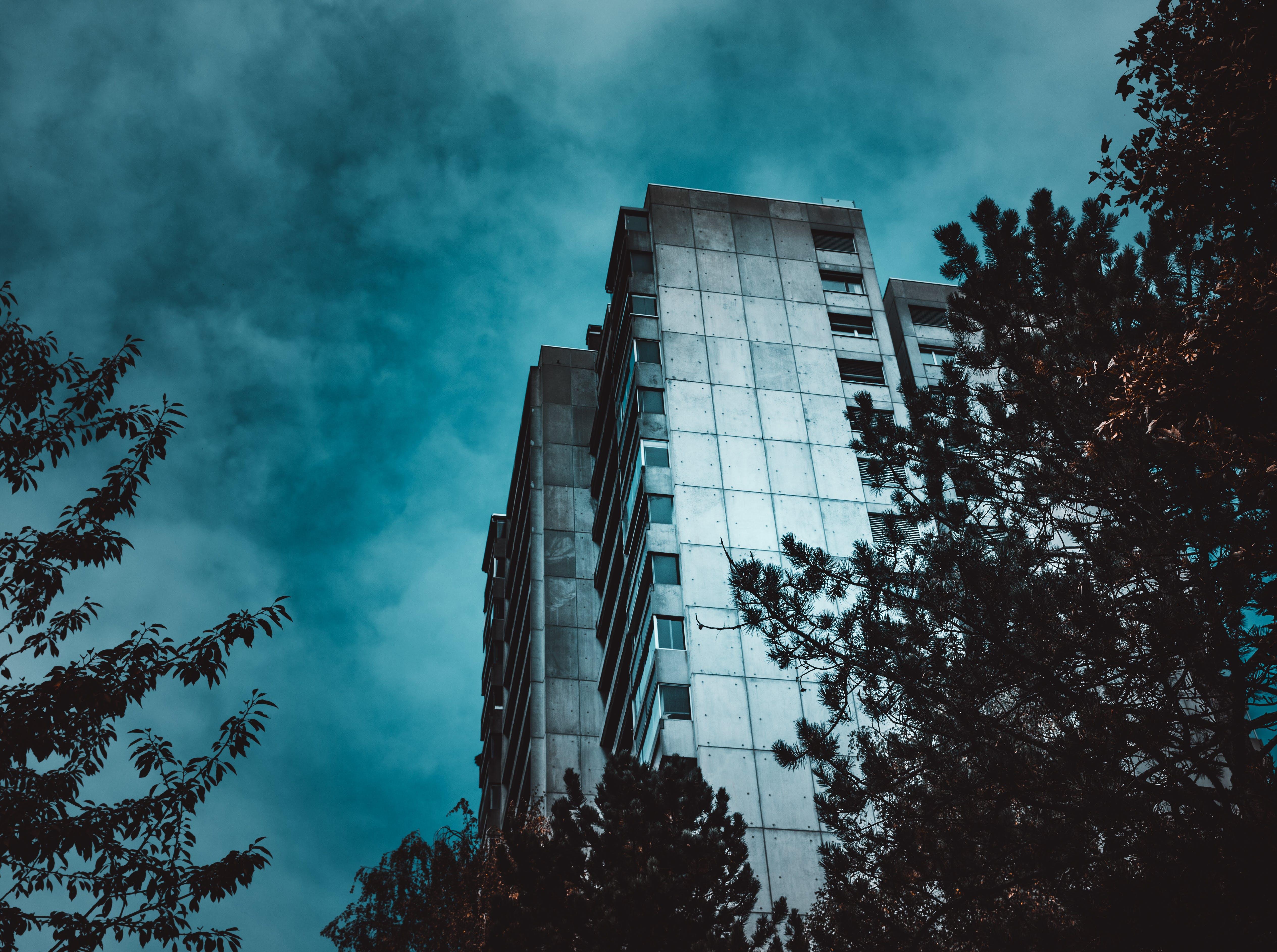 Foto profissional grátis de alto, aparência, arquitetura, árvores