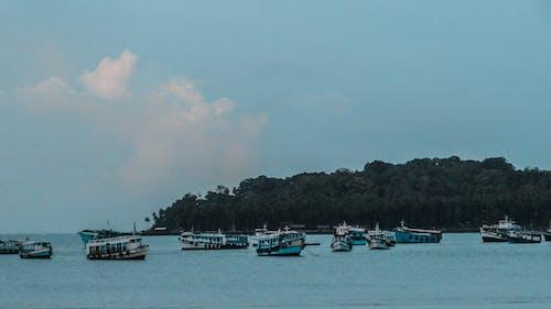 Fotos de stock gratuitas de agua, arboles, bahía, barco