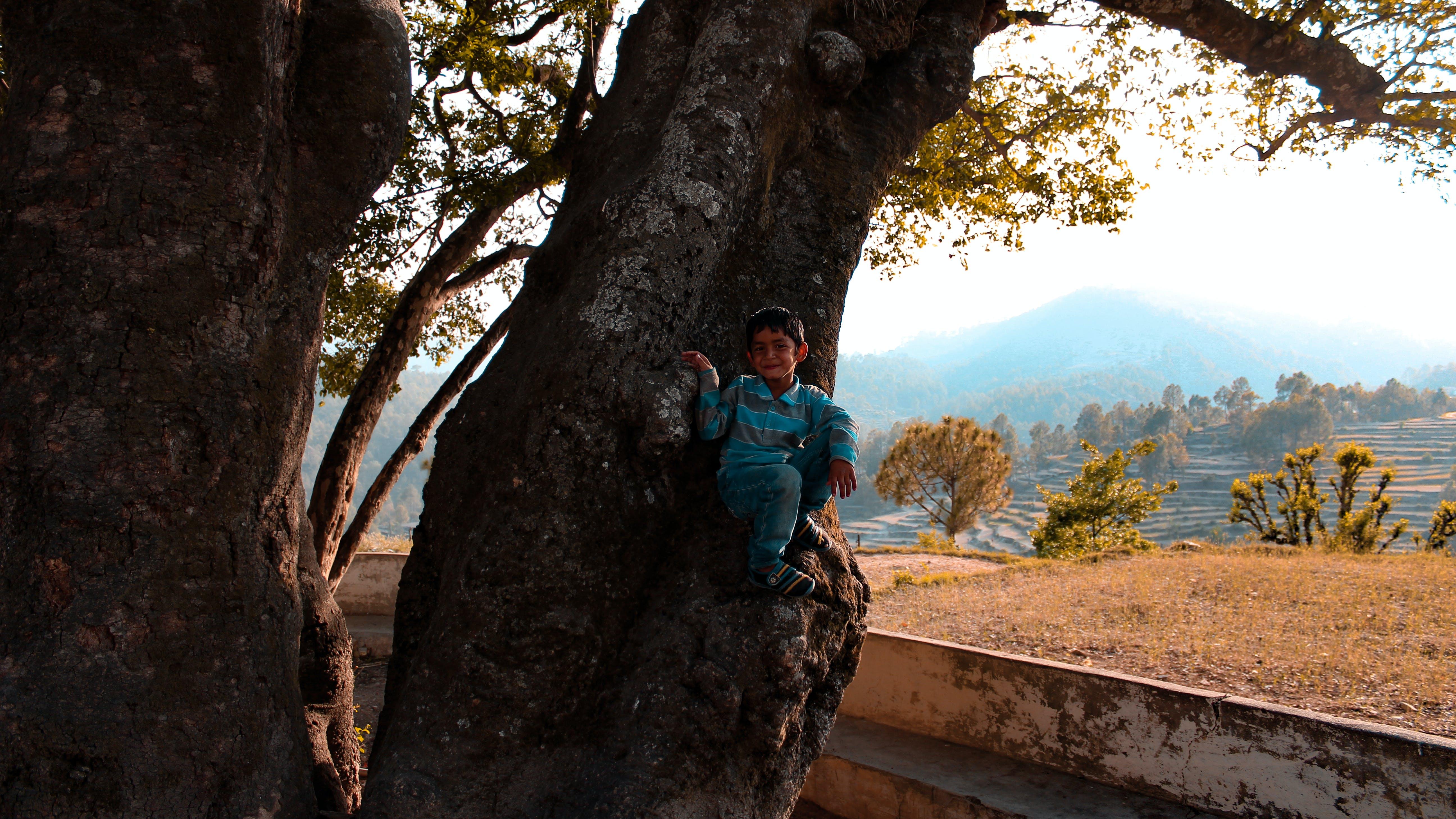 Boy Sitting On Tree