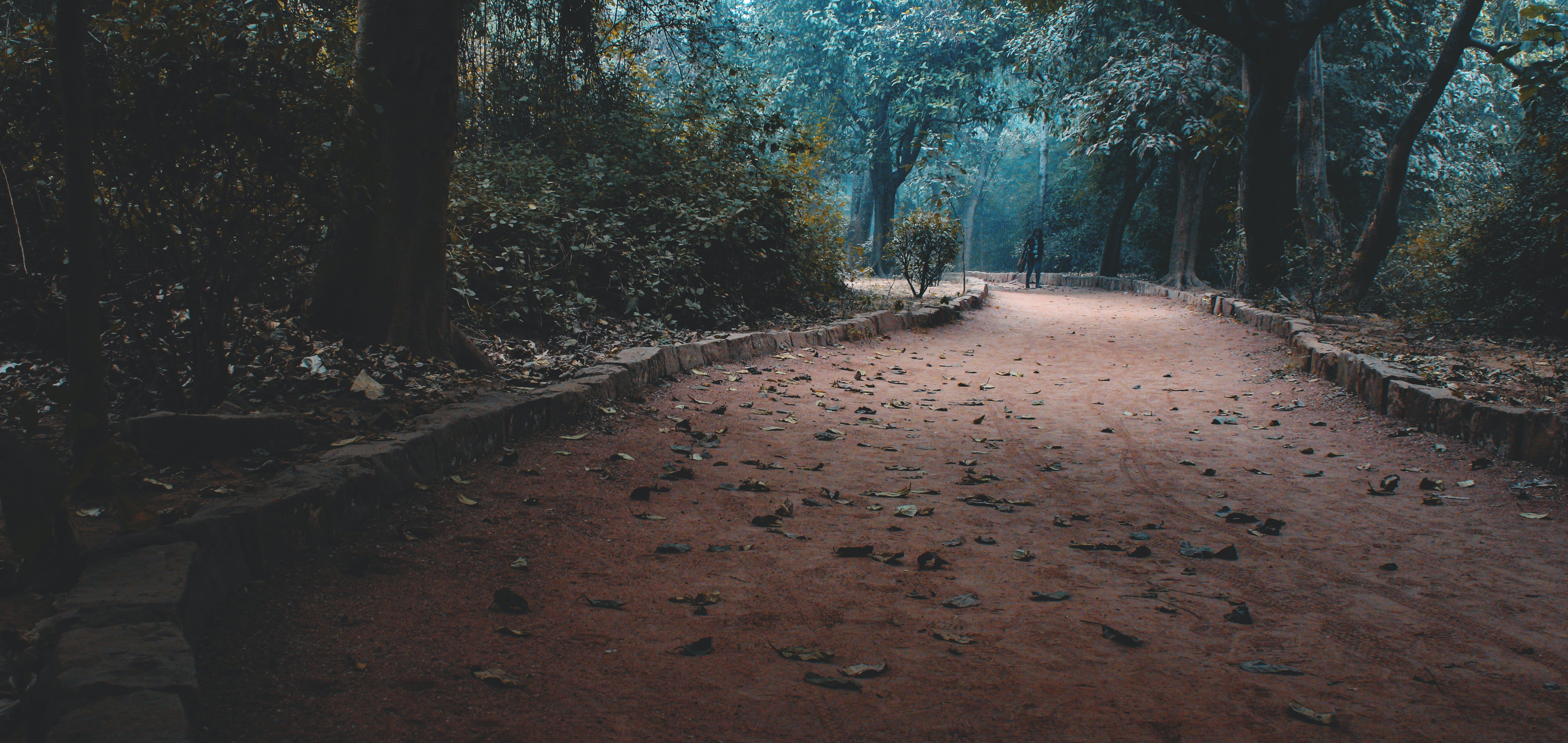 Základová fotografie zdarma na téma fotografie, krajina, lehký, listoví