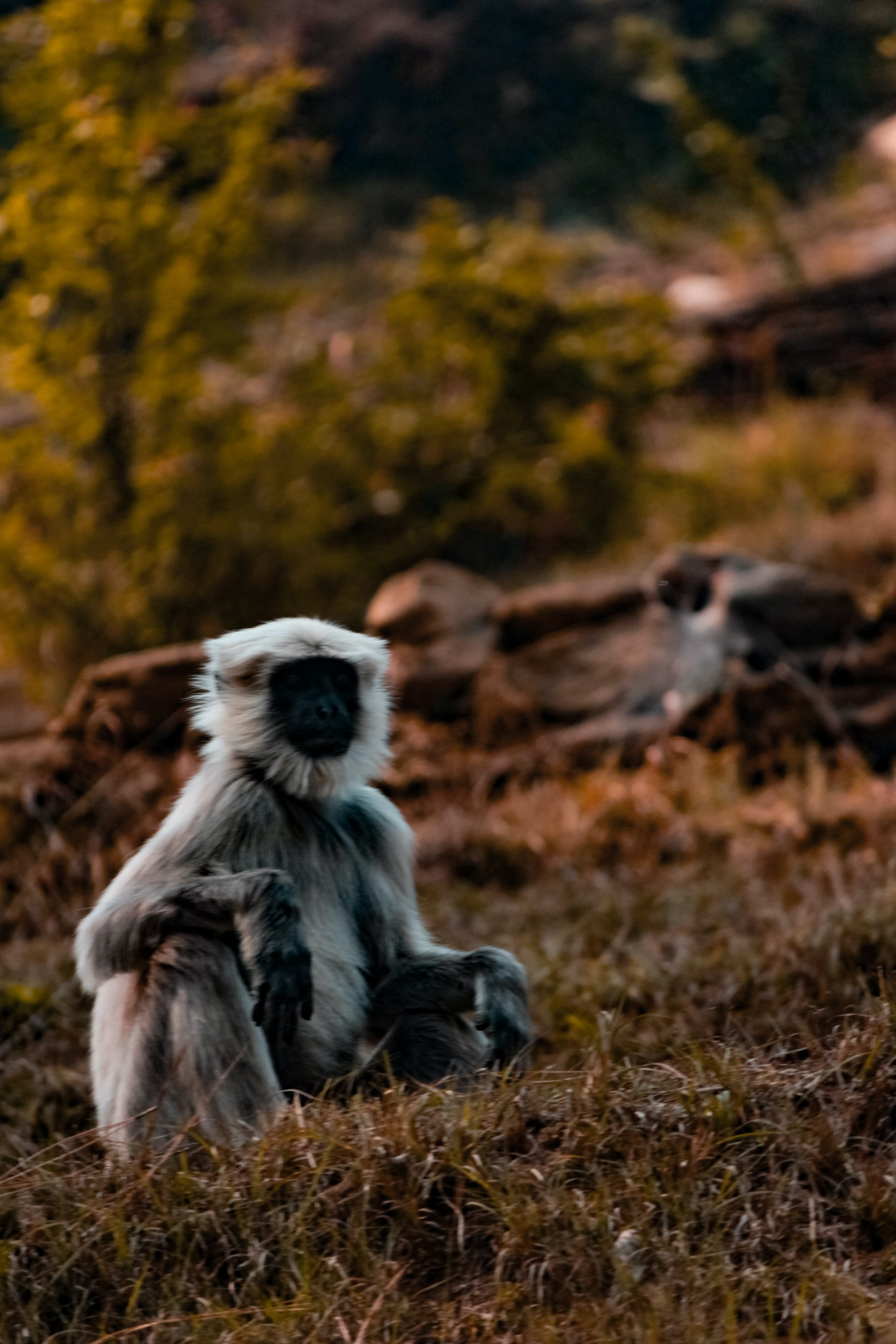 Monkey Sitting on Grass Field