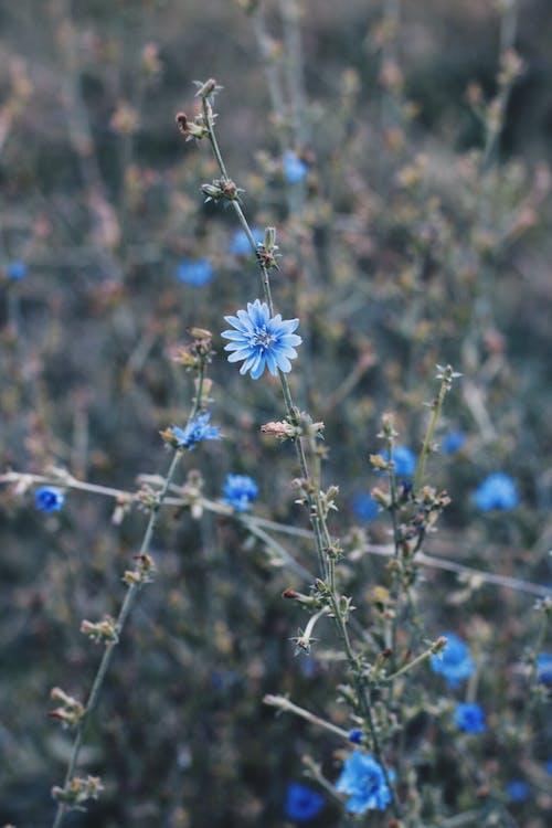 Ảnh lưu trữ miễn phí về cánh hoa, hệ thực vật, hoa, thực vật