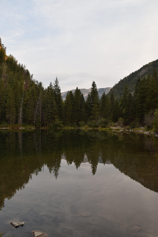 Бесплатное стоковое фото с берег, вода, гора, деревья