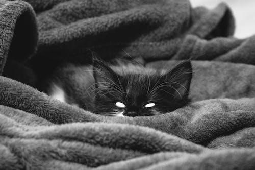 Foto stok gratis #kucing